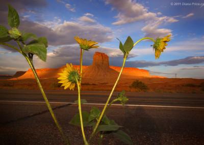 desert-617